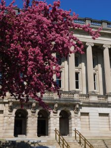 Crabapple tree blooms pink in front of Historical society